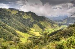Valle de Cocora Fotografía de archivo