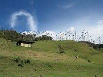 Valle de Cocora Imagen de archivo libre de regalías