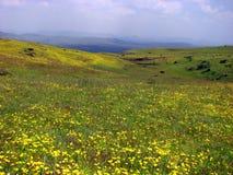 Valle de flores Imagen de archivo libre de regalías
