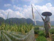 Valle de Harau Fotografía de archivo libre de regalías