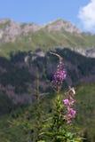 Valle de Javorova en las montañas de Tatry en Eslovaquia Imagenes de archivo