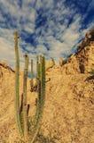 Valle de la Luna Stock Photography