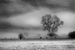 Valle de la niebla Fotos de archivo libres de regalías