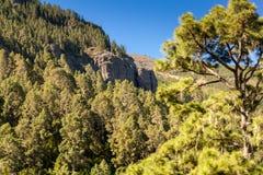 Valle de La Orotava de Tenerife Fotografía de archivo libre de regalías
