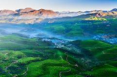 Valle de la plantación de té en la salida del sol Foto de archivo
