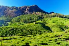 Valle de la plantación de té en Munnar Foto de archivo libre de regalías