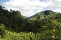 Valle de la selva, Mindanao, Filipinas imagen de archivo
