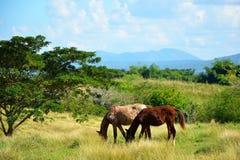 Valle de los ingenios; Куба Стоковая Фотография