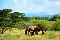 Valle de los ingenios; Cuba Fotografia Stock