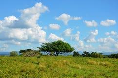 Valle De Los Ingenios; Kuba Zdjęcie Royalty Free