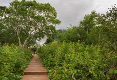 Valle de madera del rastro y del abedul de géiseres Imagen de archivo libre de regalías