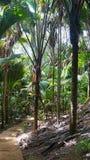 Valle de mai. National park royalty free stock photos