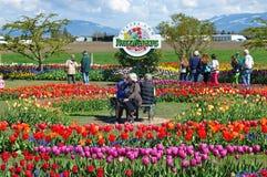 Valle 2013 de Skagit Tulip Festival Imagen de archivo libre de regalías