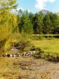 Valle de Tunka de la naturaleza Fotos de archivo libres de regalías