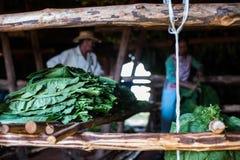 Valle de Vinales, ajuste del sol de Cuba en tabaco de sequía imagen de archivo