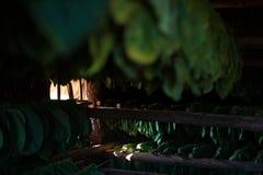 Valle de Vinales, ajuste del sol de Cuba en tabaco de sequía fotografía de archivo libre de regalías