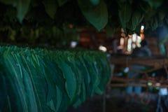 Valle de Vinales, ajuste del sol de Cuba en tabaco de sequía imagen de archivo libre de regalías