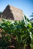 Valle de Vinales, campo de tabaco imagen de archivo libre de regalías