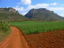 Valle de Vinales, provincia de Pinar del Rio, Cuba Imagen de archivo libre de regalías