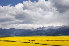 Valle dei fiori Fotografia Stock