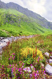 Valle dei fiori, uttarakhand India immagini stock