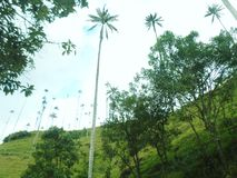 Valle del Cocora Colombia arkivfoton