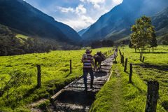 Valle del Cocora. A man and horses in the Valle del Cocora in Colombia Royalty Free Stock Images