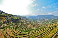 Valle del Duero: Vigne vicino al fiume di Duero intorno a Pinhao, Portogallo Fotografia Stock