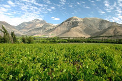 Valle del Elqui vineyard royalty free stock images