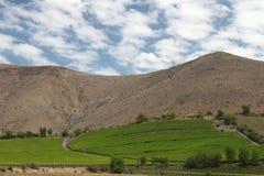 Valle del Elqui wijngaard royalty-vrije stock fotografie