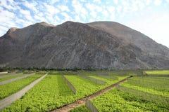 Valle del Elqui wijngaard royalty-vrije stock foto