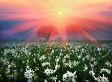 Valle del fiore Fotografia Stock