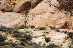 Valle del fuego Imagen de archivo