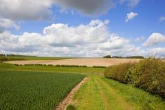 Valle del grano e bridleway Fotografia Stock
