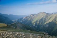 Valle del lago Kul del figlio dell'alta montagna nel tempo di inizio dell'estate, Kyrgyzst Immagini Stock Libere da Diritti