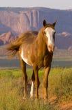 Valle del monumento del cavallo Fotografia Stock Libera da Diritti