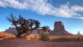 Valle del monumento dietro l'albero asciutto Fotografia Stock Libera da Diritti