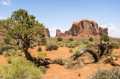 Valle del monumento, vecchi alberi - Arizona Fotografia Stock