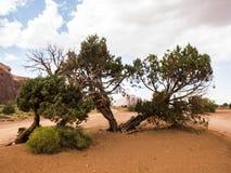Valle del monumento, vecchi alberi - Arizona, AZ Fotografie Stock Libere da Diritti