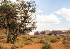 Valle del monumento, vecchi alberi - Arizona, AZ Immagini Stock