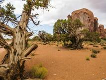Valle del monumento, vecchi alberi - Arizona, AZ Fotografia Stock Libera da Diritti