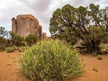 Valle del monumento, vecchi alberi e cespugli - Arizona, AZ Immagine Stock Libera da Diritti