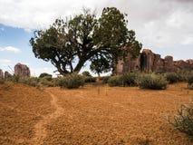 Valle del monumento, vecchi alberi, pista del rettile - Arizona, AZ Fotografia Stock