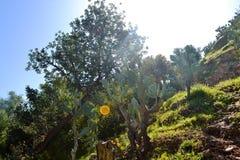 Valle del paraíso Agadir Fotografía de archivo