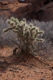 Valle del parco di stato del fuoco Nevada Immagini Stock