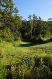 Valle del prato Fotografie Stock