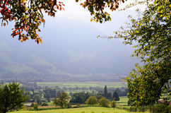 Valle del Reno (cantone del ¼ di Graubà nden, Svizzera), pagina da fogliame Fotografie Stock