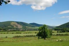 Valle del tweed en Traquair cerca de Innerleithen en Escocia foto de archivo libre de regalías