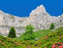 Valle del Vajolet in dolomia, alpi di Italien Fotografie Stock Libere da Diritti
