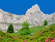 Valle del Vajolet in Dolomites,Italien Alps Royalty Free Stock Photos